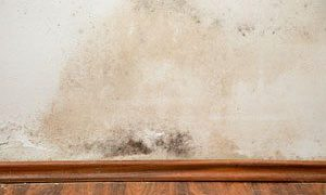 Is Mold Covered by Homeowner's Insurance?