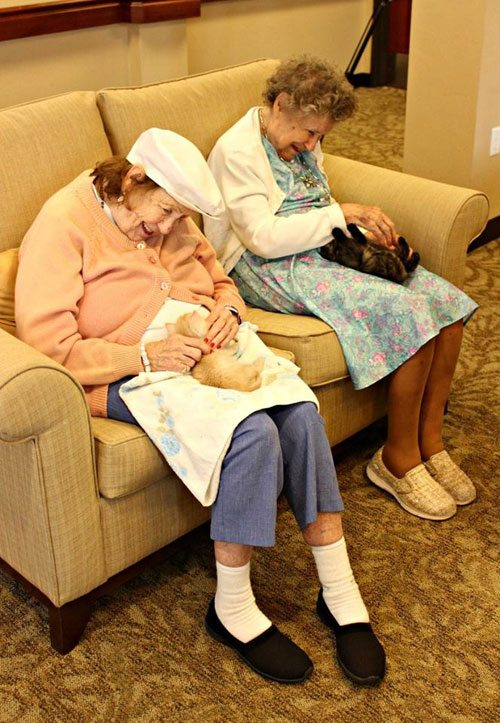 Senior women playing with kittens
