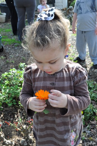 Granddaughter Lilly Belle examining a calendula