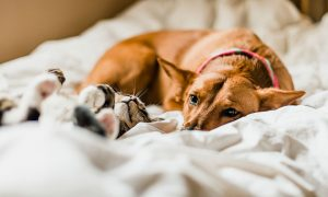 Helping Seniors Cope With Pet Loss and Grief